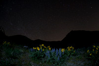 Arrowleaf balsamroot and lupine flowers with stars, eastern Washington