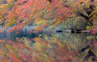 Fall colors reflected in pond, Beacon Falls, Connecticut