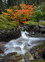 Skate Creek with fall color, Gifford Pinchot National Forest, Washington