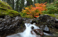 Fall color along Skate Creek, Gifford Pinchot National Forest, Washington